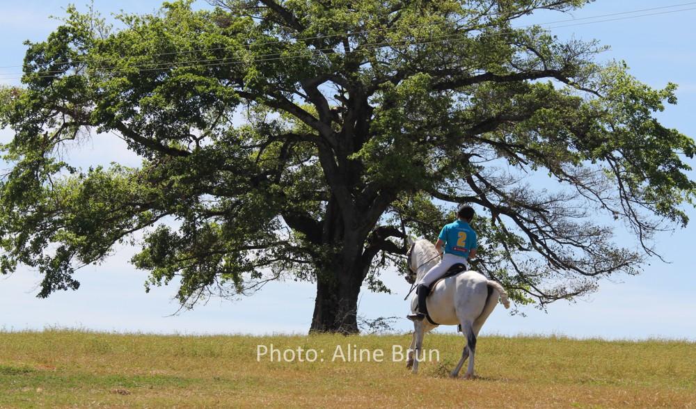 Equitação de Trabalho na Interagro/Aline Brun