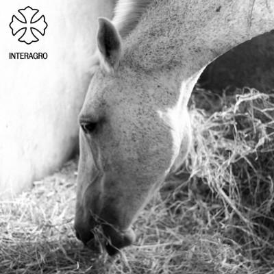 Ociosa_Interagro