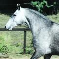 Papoula_Interagro_MCG-2-2