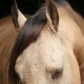 Comanche_8