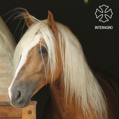 Etereo_Interagro_1155 (2)