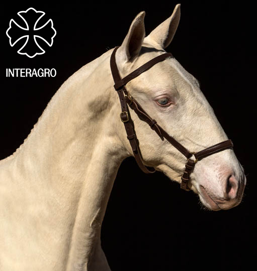 MARROQUINEIRA INTERAGRO 9O2A1621