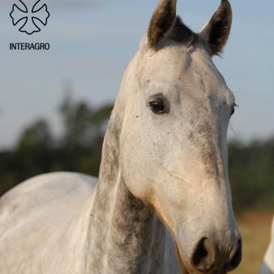 Vicunha_Interagro_JW-2-2