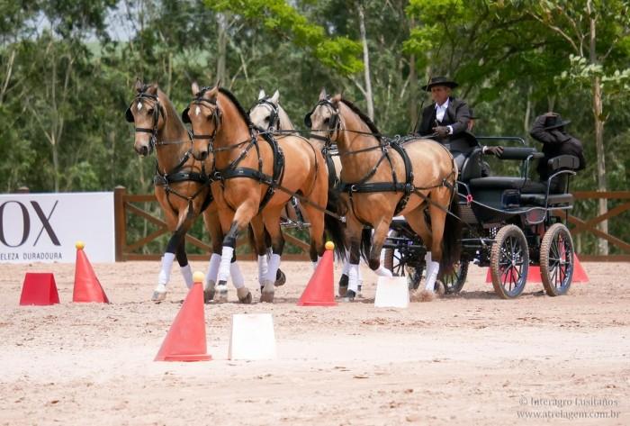 Antonio Mariano de Souza venceu o Campeonato Brasileiro de Atrelagem na categoria Quadra com quatro cavalos Interagro: Cagliostro, Comanche, Demócrito e Crispim