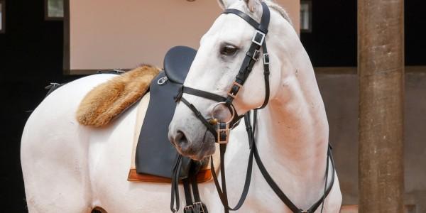 V etapa do Campeonato Brasileiro de Equitação de Trabalho/Cia. de E.T – resultados