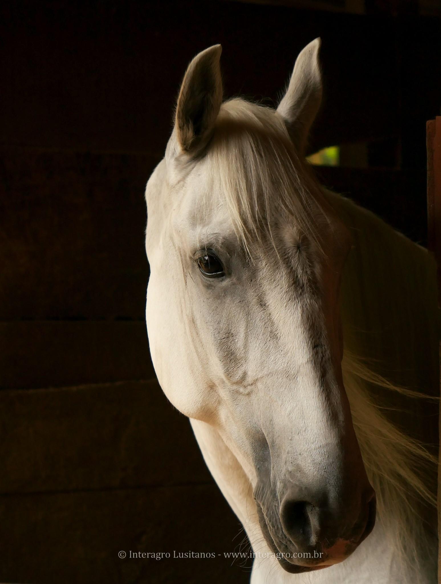 Eros Interagro em sua 1a prova de Equitação de Trabalho