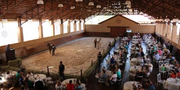 Adestramento Brasil: O que considerar na compra de cavalo em leilão
