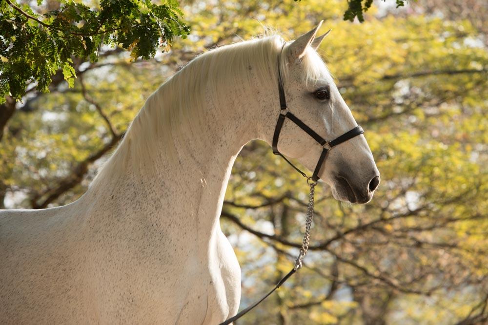 Perdigueiro (MAC) Foto TUPA