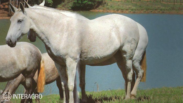 Vardasca_FB_livro Cavalo Lusitano Linhagens pp 92 e 93.