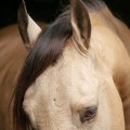 Comanche Interagro_8