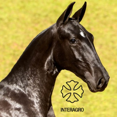 MADRIGAL INTERAGRO 9O2A1016-1667_1