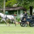 Herbert_Interagro_Adestramento-15
